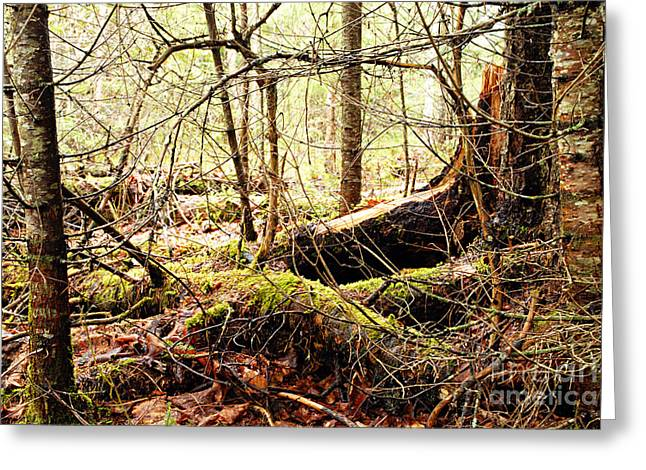 Tangled Forest Greeting Card
