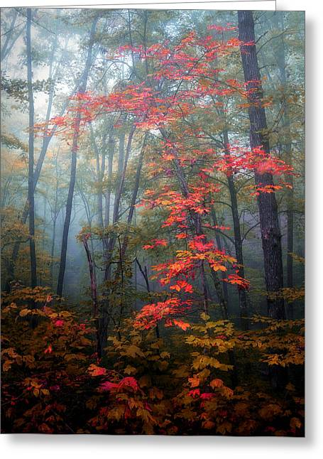 Tanglewood Forest Greeting Card by William Schmid