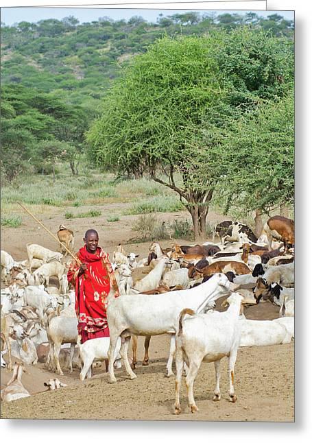 Tanzania, Arusha, Maasai Men Herder Greeting Card