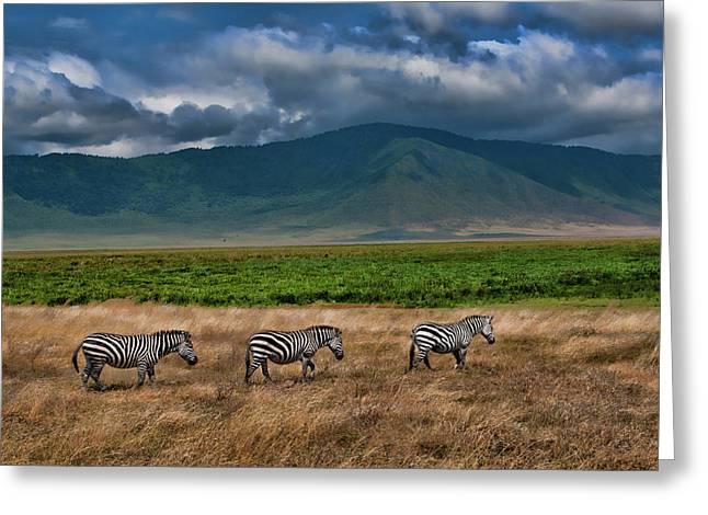 Tanzania, Ngorongoro Conservation Area Greeting Card by Bill Bachmann