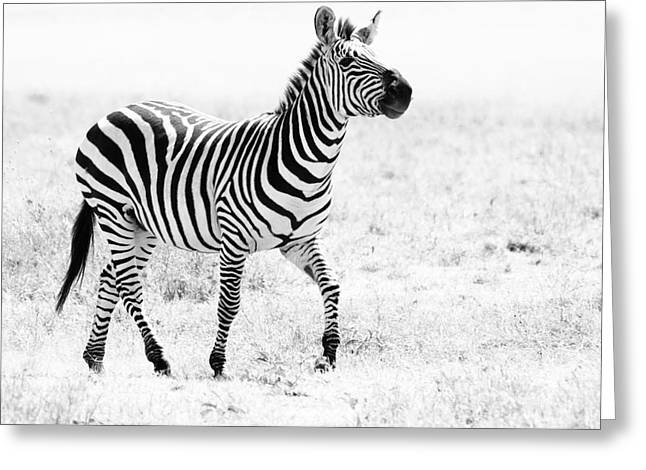 Tanzania Zebra Greeting Card
