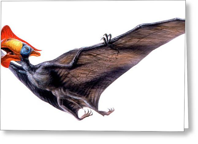 Tapejara Pterosaur Greeting Card by Deagostini/uig