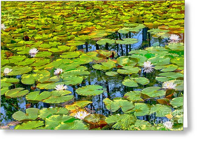 Tapestry Of Lillies Greeting Card