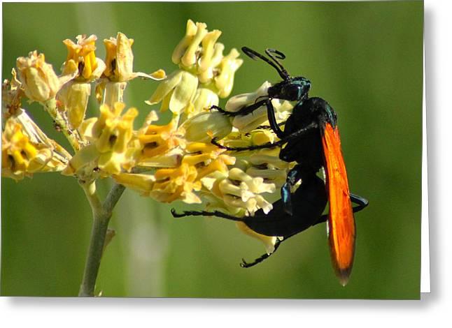 Tarantula Hawk Wasp Greeting Card by Richard Stephen