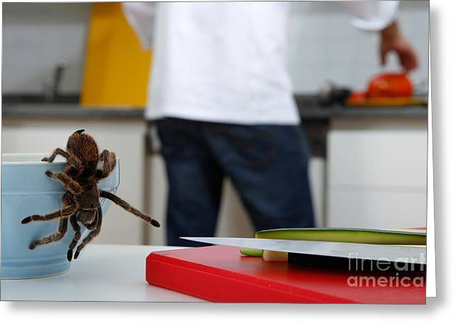 Tarantula Trying To Escape Greeting Card by Emilio Scoti