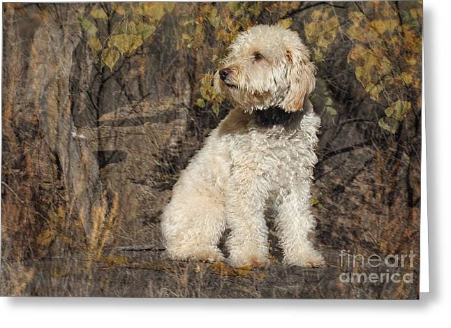 Tashi Greeting Card by Bob Hislop