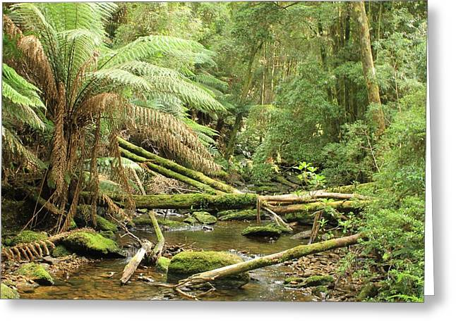 Tasmanian Rain Forest River All Profits Go To Hospice Of The Calumet Area Greeting Card
