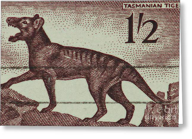 Tasmanian Tiger Vintage Postage Stamp Greeting Card