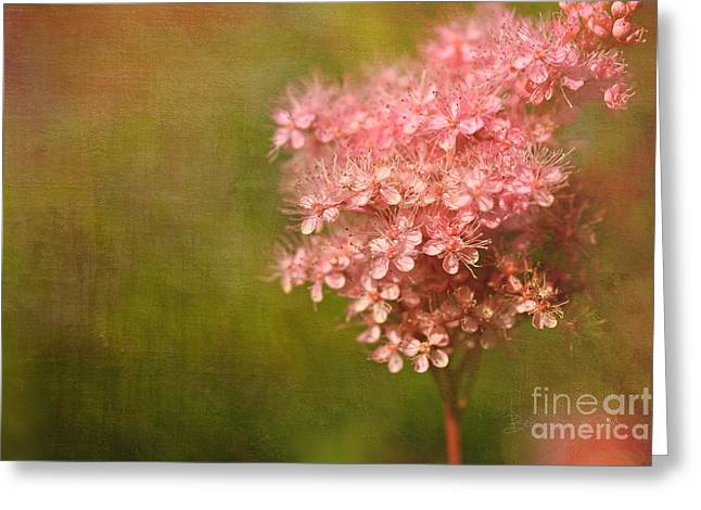 Taste Of Summer Greeting Card by Beve Brown-Clark Photography