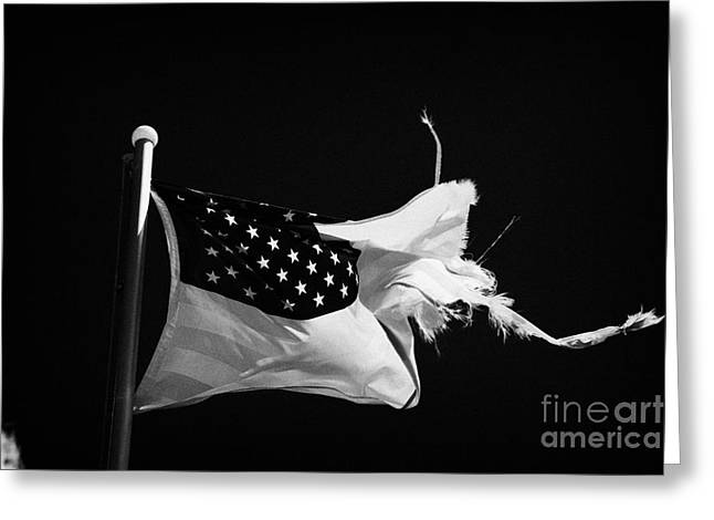 Tattered Torn Worn Us Flag Flying From Flagpole Greeting Card by Joe Fox