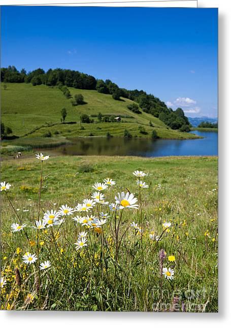 Tau Mare Lake Greeting Card by Gabriela Insuratelu