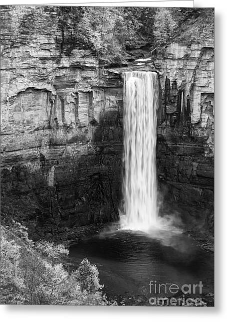 Taughannock Monochrome II Greeting Card by Michele Steffey