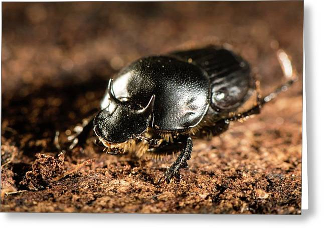 Taurus Scarab Beetle Greeting Card by Philippe Psaila