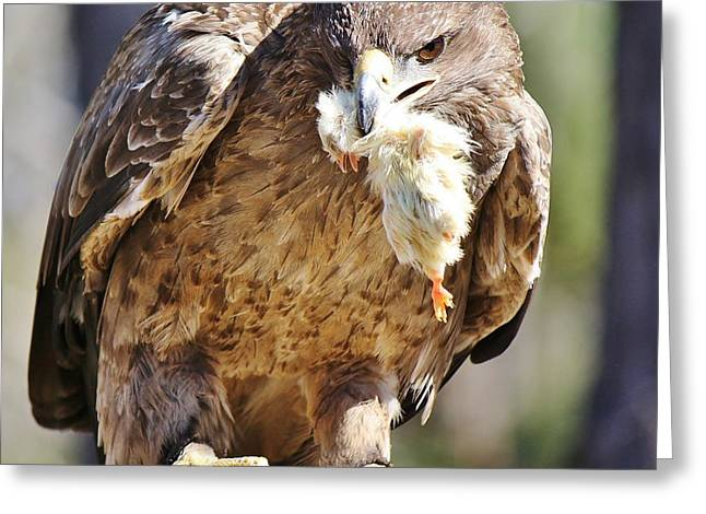 Tawny Eagle With Chicken Dinner Greeting Card by Paulette Thomas