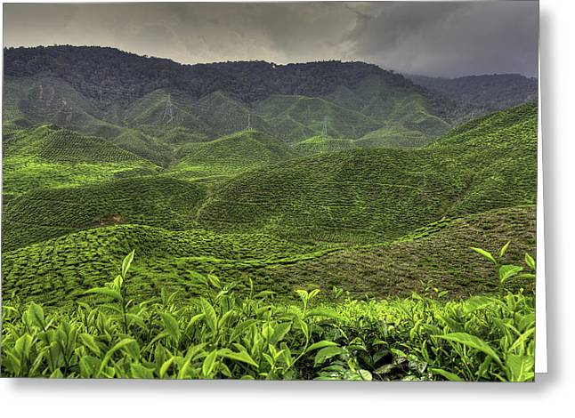 Tea Farm Greeting Card by Mario Legaspi