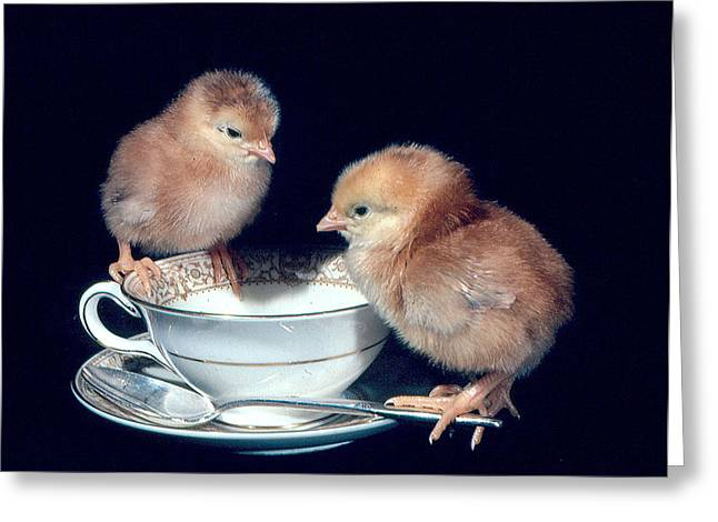 Greeting Card featuring the photograph Tea For Two by Paul Miller