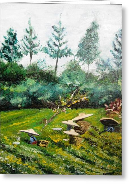 Tea Plantation In Indonesia Greeting Card