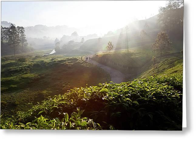 Tea Plantations And Road, Munnar Greeting Card by Peter Adams