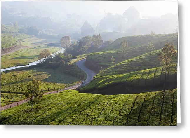Tea Plantations, Munnar, Western Ghats Greeting Card by Peter Adams