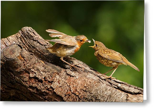 Tea Time For Robins Greeting Card