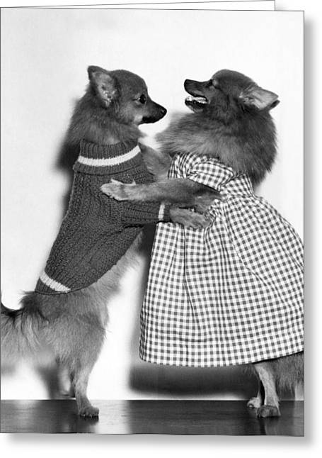 Teaching A Young Dog New Trick Greeting Card by Underwood Archives