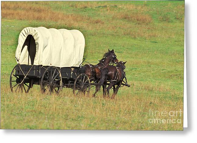 Team Of Horses Pulling A Covered Wagon Greeting Card