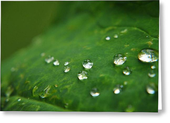Tear Drops From Heaven  Greeting Card
