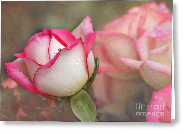 Tears In The Garden Greeting Card by Sabrina L Ryan
