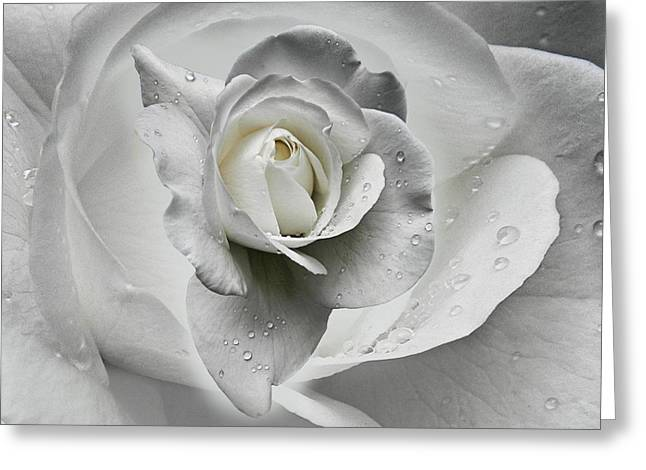 Tears In The Rosegarden Greeting Card by Joachim G Pinkawa