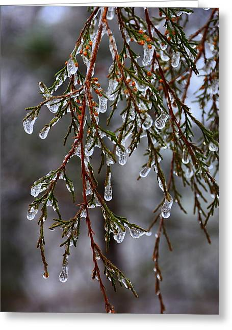 Tears Of Ice Greeting Card by Lisa Wooten
