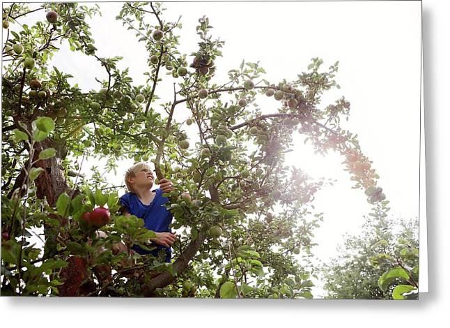 Teenage Boy Climbing An Apple Tree Greeting Card by Thomas Fredberg