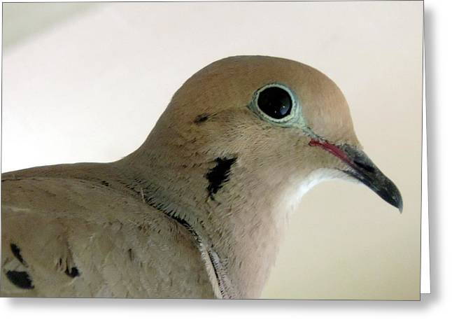 Teenage Dove Greeting Card