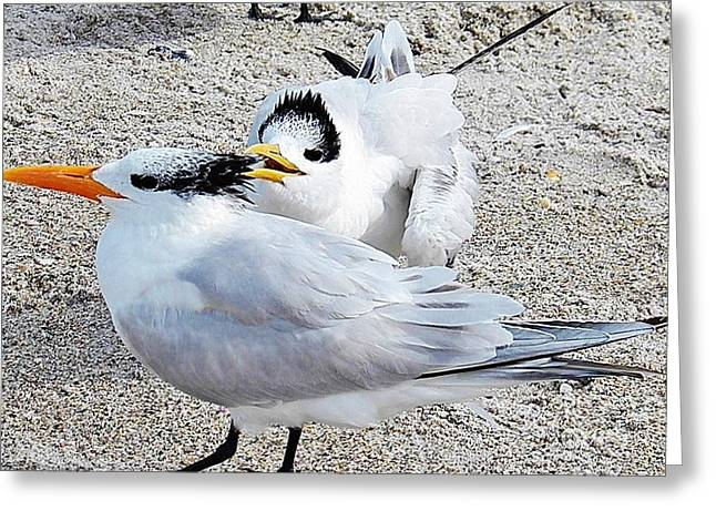 Telling Secrets Royal Terns Greeting Card by Judy Via-Wolff