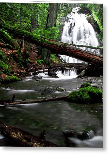 Temperate Old Growth Greeting Card