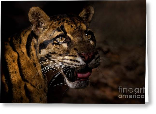 Tenacious Embers Greeting Card by Ashley Vincent