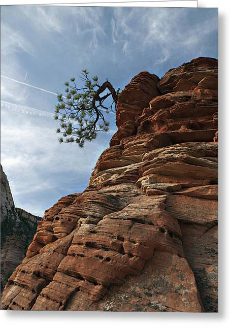Greeting Card featuring the photograph Tenacity by Joe Schofield