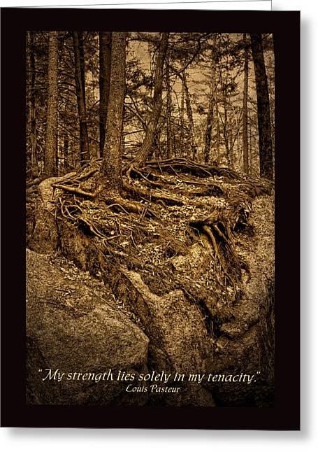 Tenacity - Roots - Inspirational Quote Greeting Card by Nikolyn McDonald