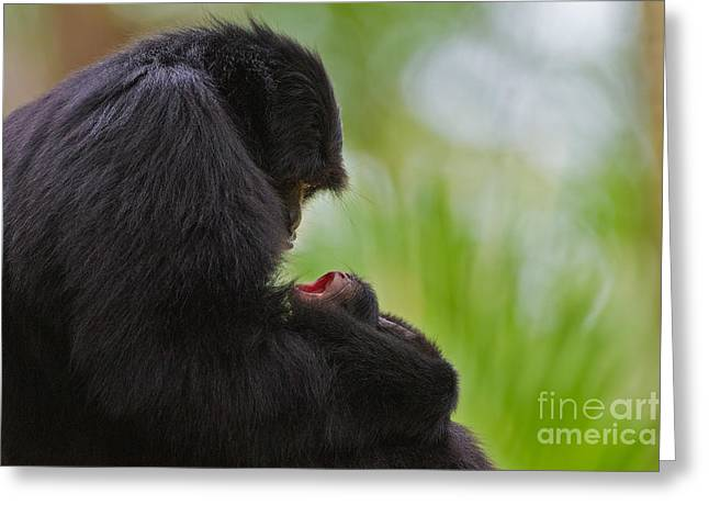 Tender Moments Greeting Card by Ashley Vincent