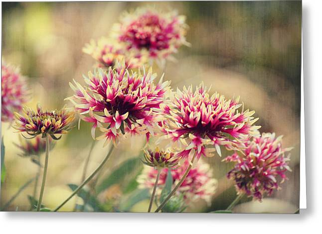 Tender Pink Blooms Greeting Card