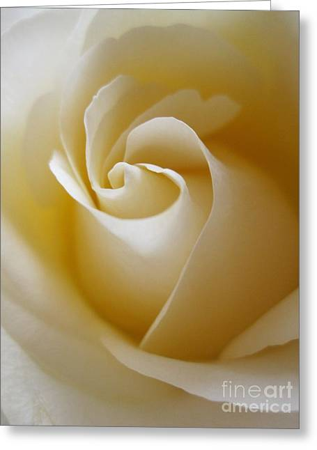 Tenderness White Rose 3 Greeting Card