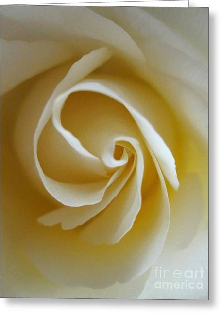 Tenderness White Rose 5 Greeting Card