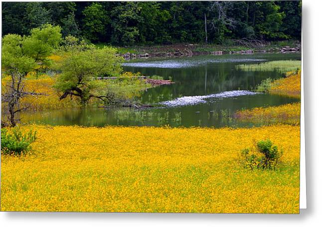Tennessee Black-eyed Susan Field Greeting Card