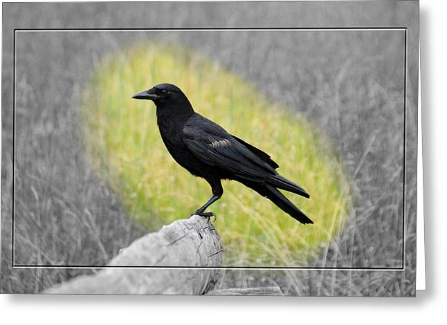 Tennessee Crow Greeting Card by Robert Clayton