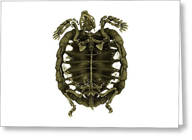Tent Tortoise Greeting Card