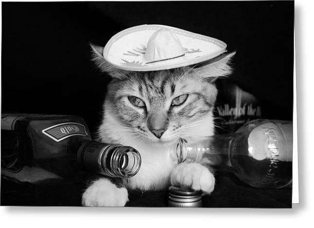 tequila-cat-cuca-montoya.jpg