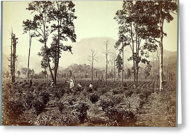 Terai Tea Association Plantation Greeting Card