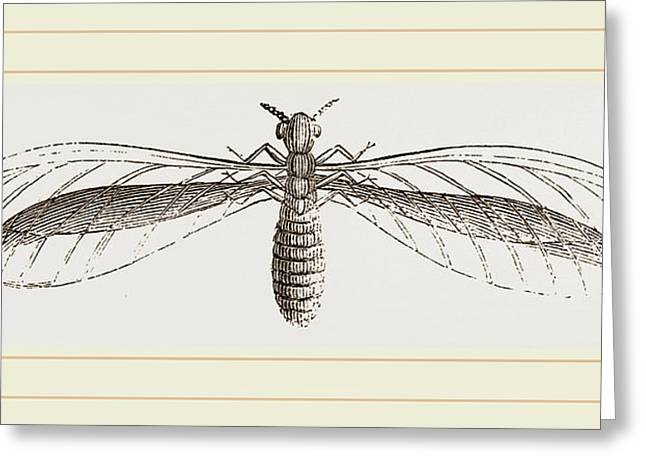 Termes Bellicosus In Winged State Greeting Card by Litz Collection