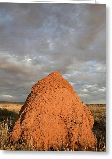 Termite Mound, Exmouth, Australia. Greeting Card by Science Photo Library