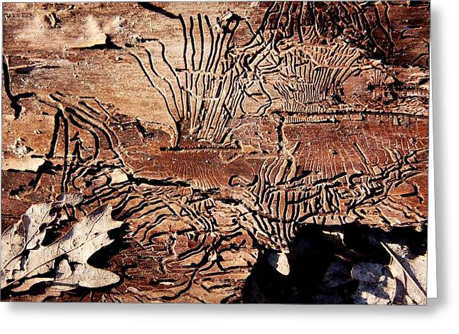 Termite Trails Greeting Card by Kevin Grant