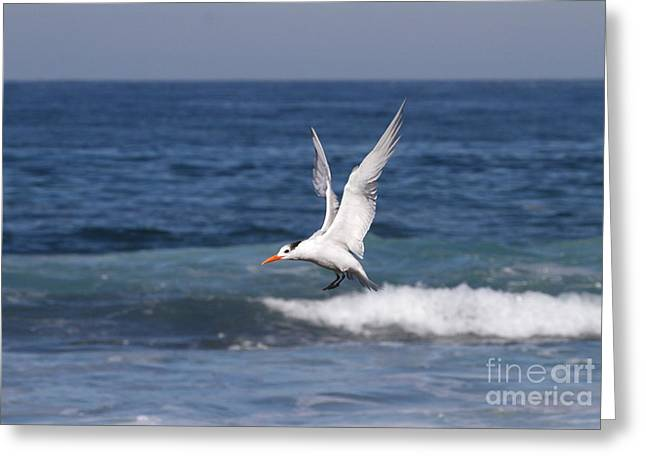 Tern In The Surf Greeting Card by Ruth Jolly